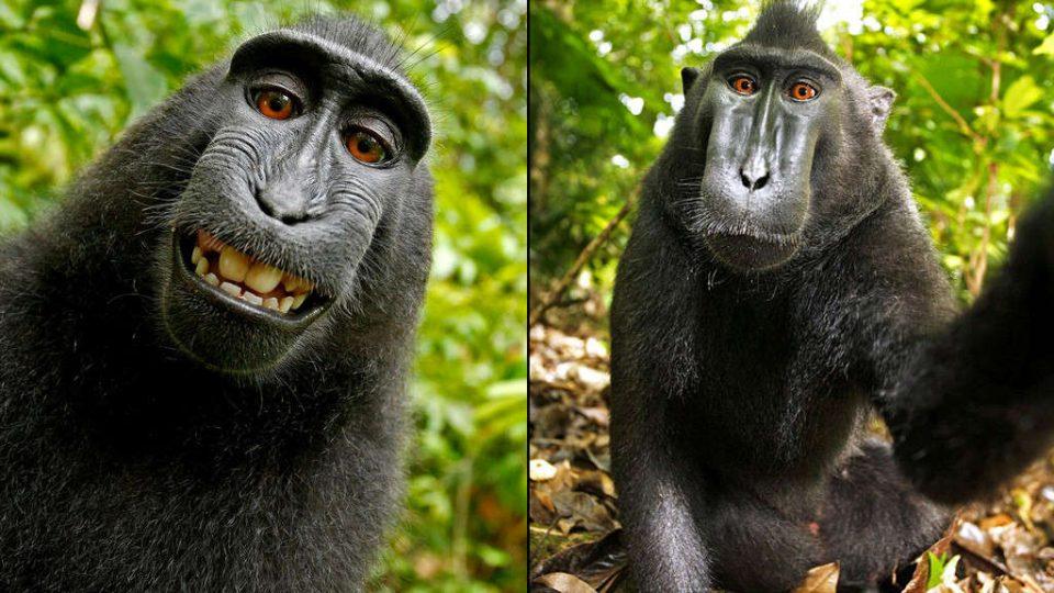ناروتو، میمون سلفی بگیر